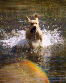 Dog Splashing in Water - Boarding Services, Training Services in Clyde Township, MI